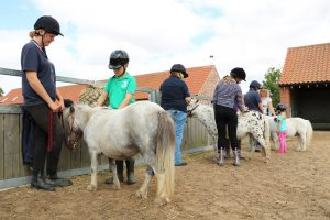 'Five Freedoms' Trail & Pony Grooming @ Bransby Horses  | Bransby | England | United Kingdom