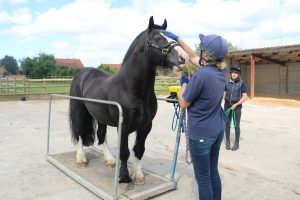 'Five Freedoms' Trail & Guess the Weight with Twiggy and Spotty @ Bransby Horses  | Bransby | England | United Kingdom