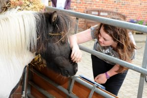 Meet the 'Golden Oldies' @ Bransby Horses   Bransby   England   United Kingdom