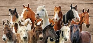 Guided Tour of the Adoption Animals @ Bransby Horses   Bransby   England   United Kingdom