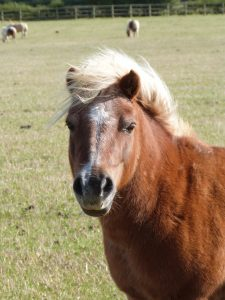 Equine Metabolic Syndrome (EMS) Talk @ Bransby Horses   Bransby   England   United Kingdom
