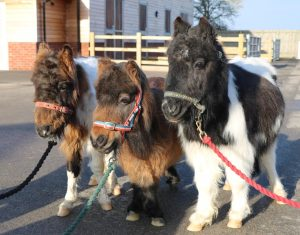 'Five Freedoms' Trail & Talk on Tyrian, Alfie and Tinkerbell @ Bransby Horses  | Bransby | England | United Kingdom