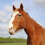 Home Bransby Horses