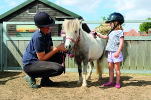 Pony Grooming @ Bransby Horses | Bransby | England | United Kingdom