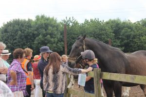 Meet the Police Horses @ Bransby Horses   Bransby   England   United Kingdom
