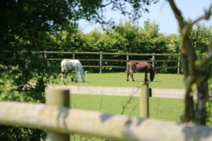 Nature Trail @ Bransby Horses   Bransby   England   United Kingdom