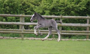 Meet the Foals @ Bransby Horses   Bransby   England   United Kingdom