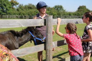 Adoption Tour @ Bransby Horses