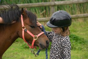 Pony Handling @ Bransby Horses