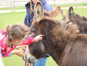 Donkey Pat and Chat @ Bransby Horses