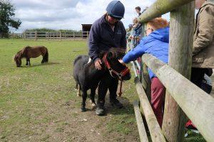 Meet the Mini Shetlands @ Bransby Horses
