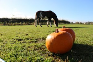 Creative Halloween Crafts @ Bransby Horses