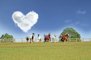 Hunt the Hearts Valentines Trail @ Bransby Horses