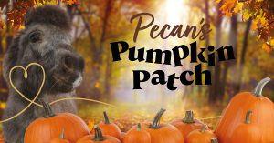 Pecan's Pumpkin Patch - SOLD OUT @ Bransby Horses