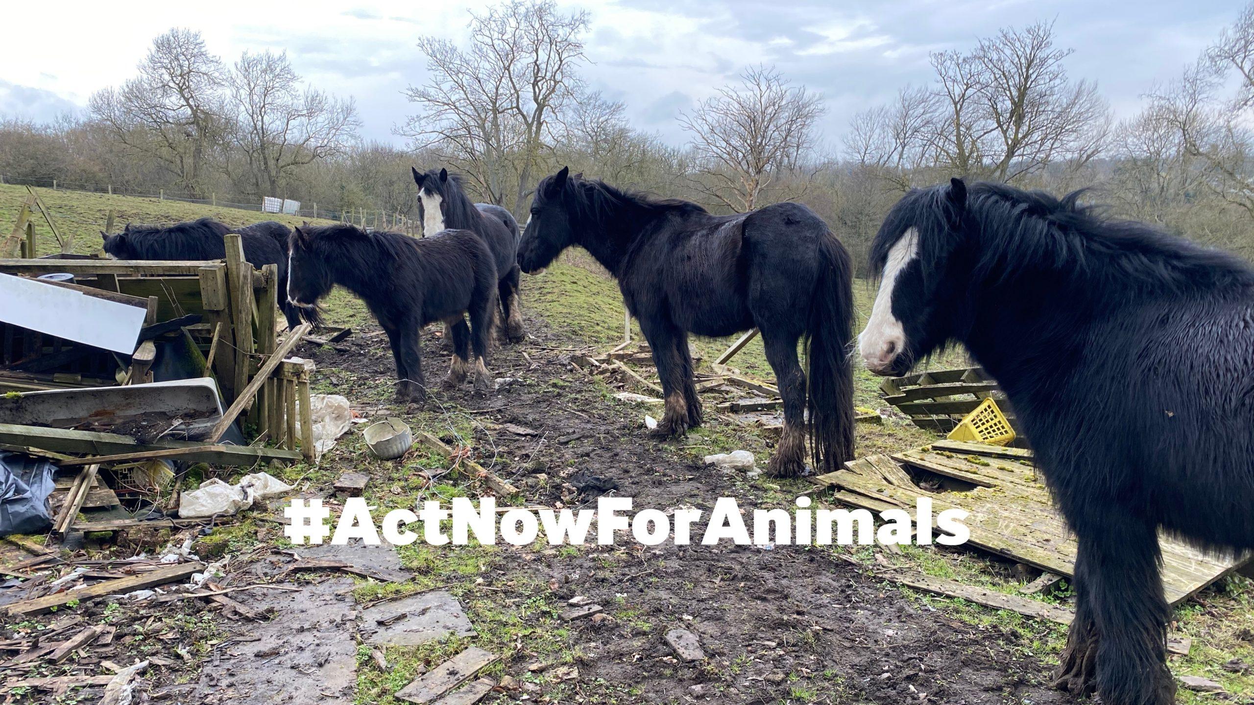 #ActNowForAnimals