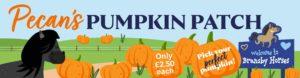 Pumpkin Patch 1-31 October