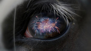 Tips for horse owners this Bonfire Night
